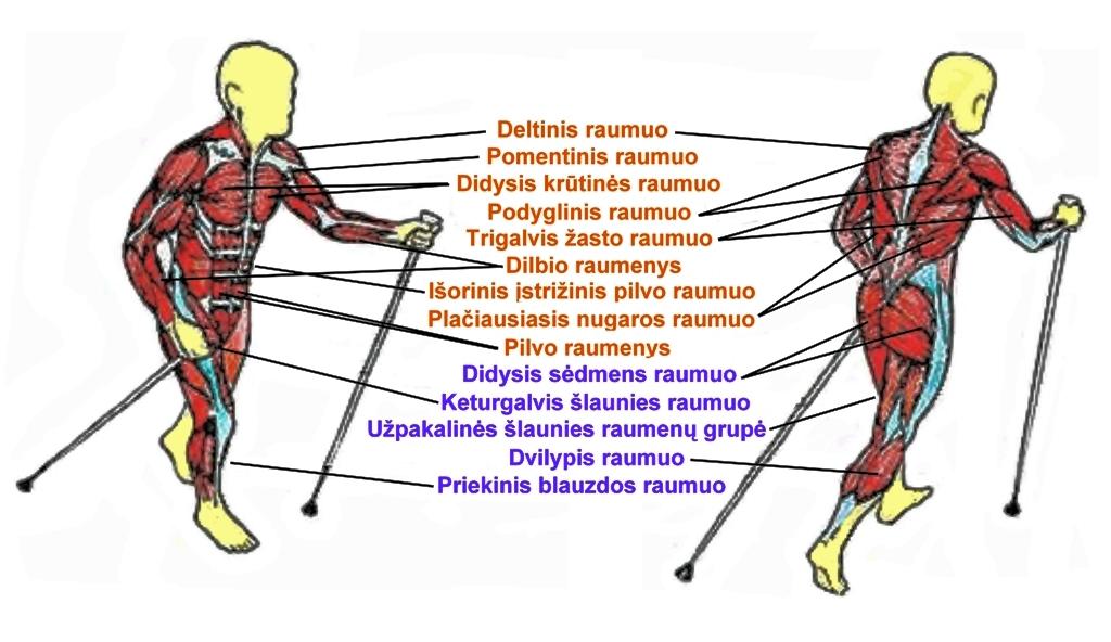 raumenys vaiksciojimas
